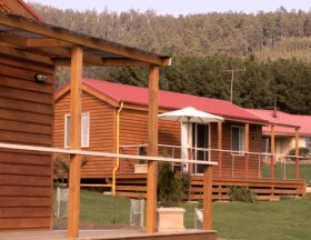 Maydena Country Cabins Accommodation  Alpaca Stud - Townsville Tourism