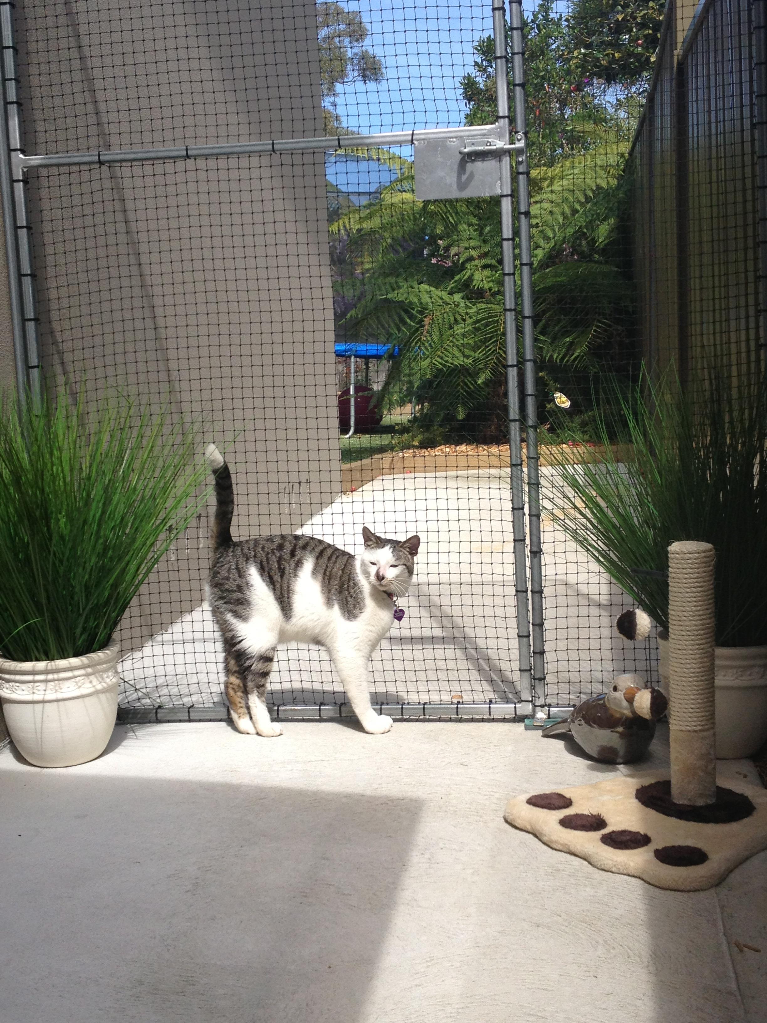 Caringbah Cat Hotel - Townsville Tourism