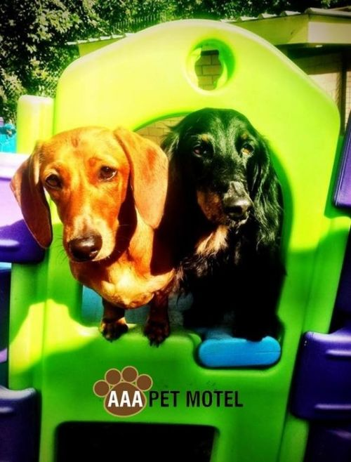 AAA Pet Motel - Townsville Tourism
