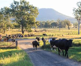 Tommerups Dairy Farmstay - Townsville Tourism
