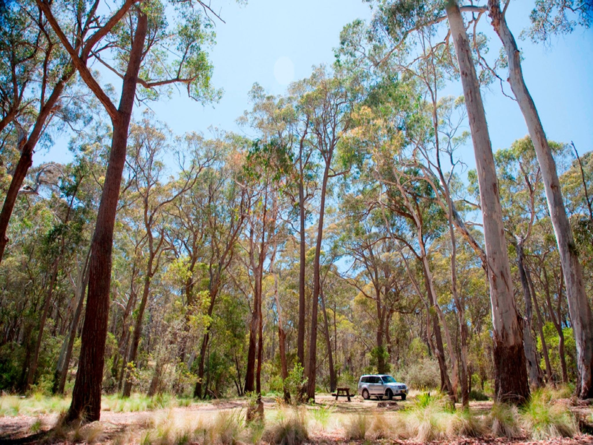 Coolah Tops National Park Camping - Townsville Tourism