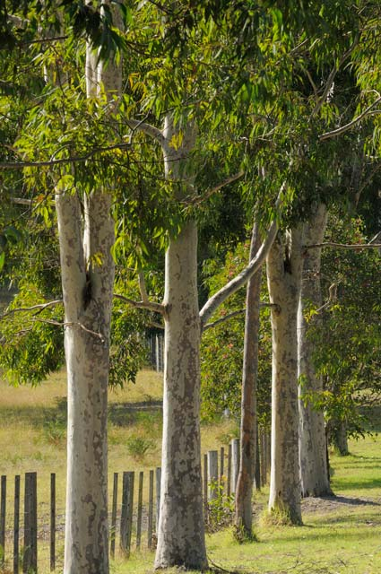 Stringybark Cottages - Townsville Tourism