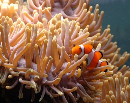 Reef HQ Great Barrier Reef Aquarium - Townsville Tourism