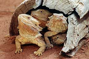 Alice Springs Reptile Centre - Townsville Tourism