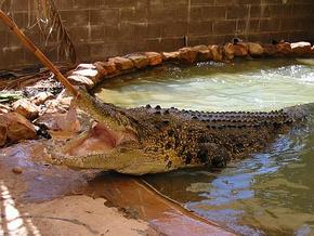 Wyndham Zoological Gardens and Crocodile Park - Townsville Tourism