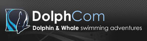 Dolphcom - Dolphin & Whale Swimming Adventures - Townsville Tourism