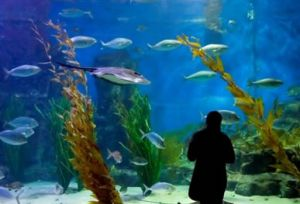 Melbourne Aquarium - Townsville Tourism