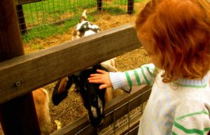 Collingwood Children's Farm - Townsville Tourism