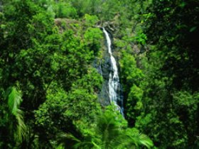 Kondalilla National Park - Townsville Tourism