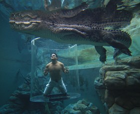 Crocosaurus Cove - Townsville Tourism