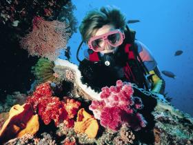 Cook Island Dive Site - Townsville Tourism