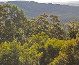 Conondale National Park - Townsville Tourism