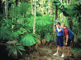 Mount Sorrow Ridge Trail Daintree National Park - Townsville Tourism