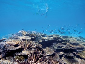 Australian Institute of Marine Science - Townsville Tourism