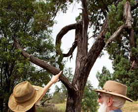 Charleville - Outback Native Timber Walk - Townsville Tourism
