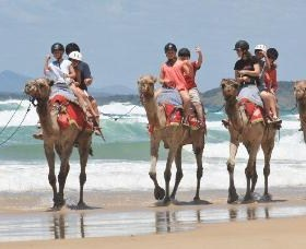 Camel Rides with Coffs Coast Camels - Townsville Tourism