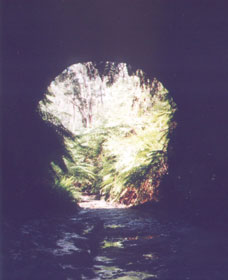 Glow Worm Tunnel - Townsville Tourism