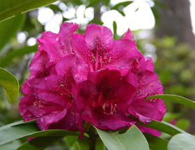 Campbell Rhododendron Gardens - Townsville Tourism