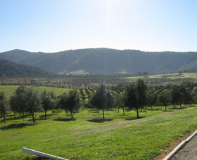 Hastings Valley Olives - Townsville Tourism