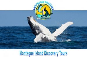 Lighthouse Charters Narooma - Townsville Tourism