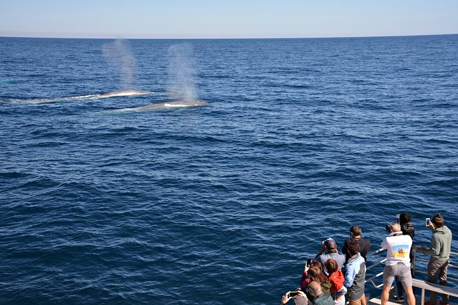 Blue Whale Perth Canyon Expedition - Townsville Tourism