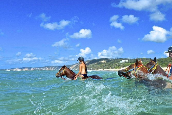 Horse Swimming Ride from Rainbow Beach - Townsville Tourism