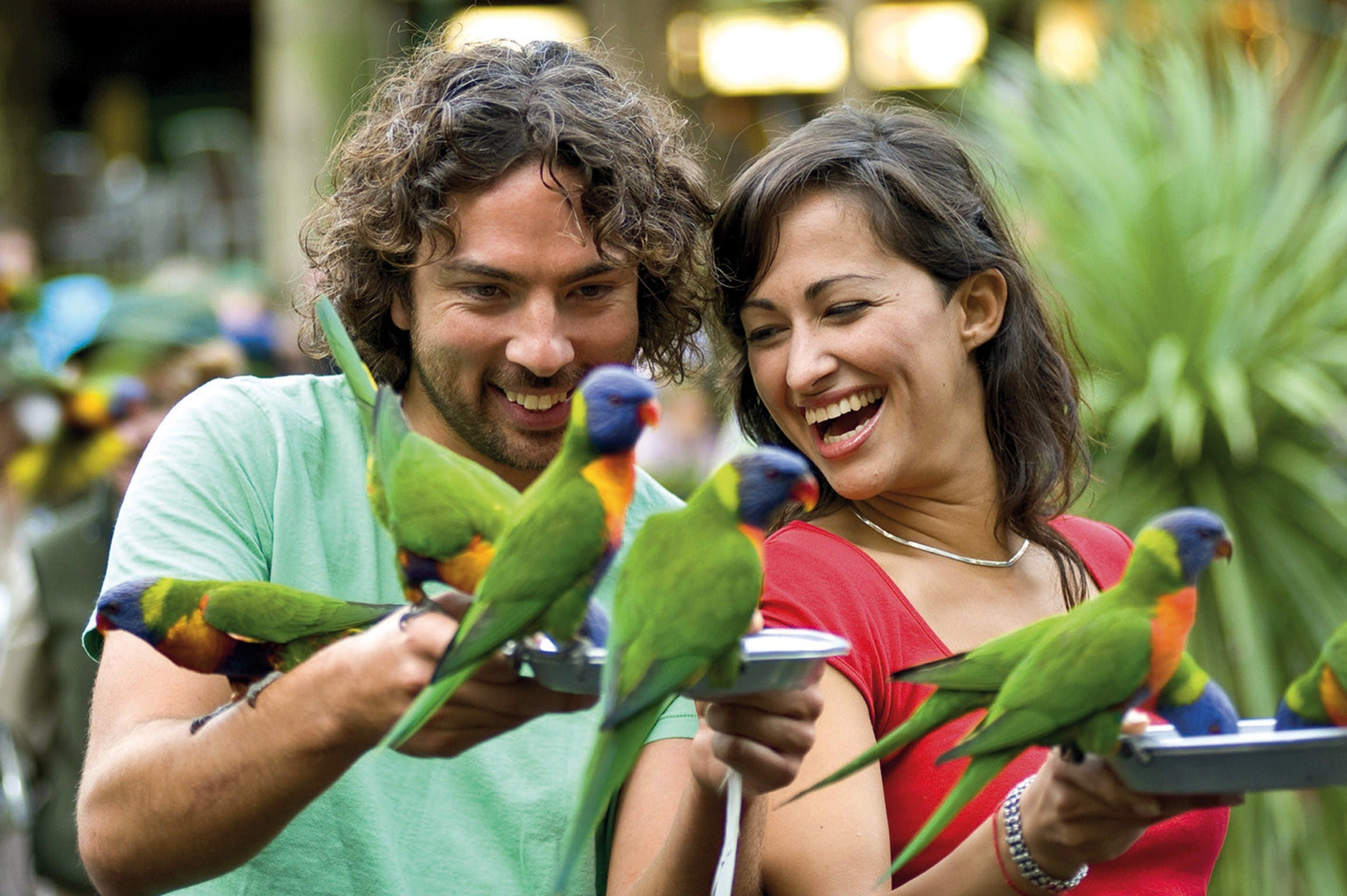 Currumbin Wildlife Sanctuary - Townsville Tourism