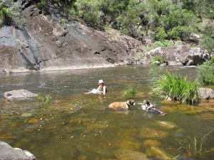 Mount Boss State Forest - Townsville Tourism