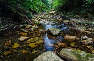 Willi Willi National Park - Townsville Tourism