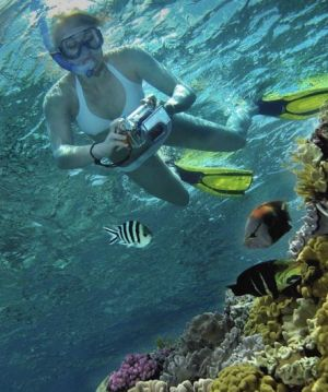 Calypso Reef Charters - Townsville Tourism