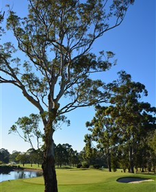 Ryde-Parramatta Golf Club - Townsville Tourism