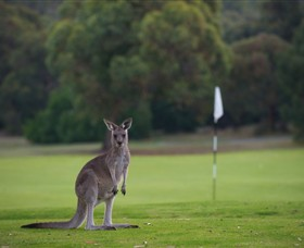 Anglesea Golf Club - Townsville Tourism