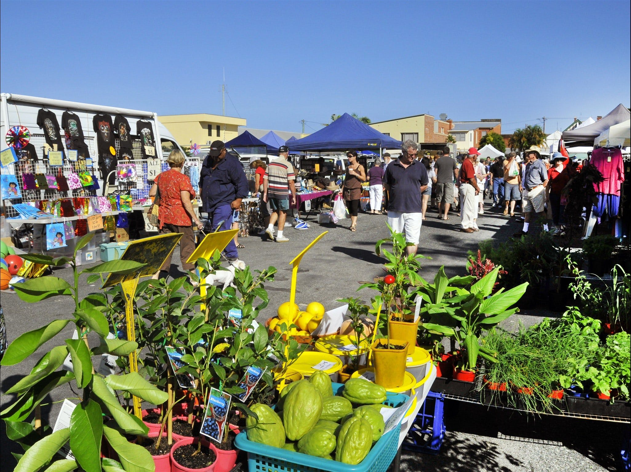 Maclean Community Monthly Markets - Townsville Tourism