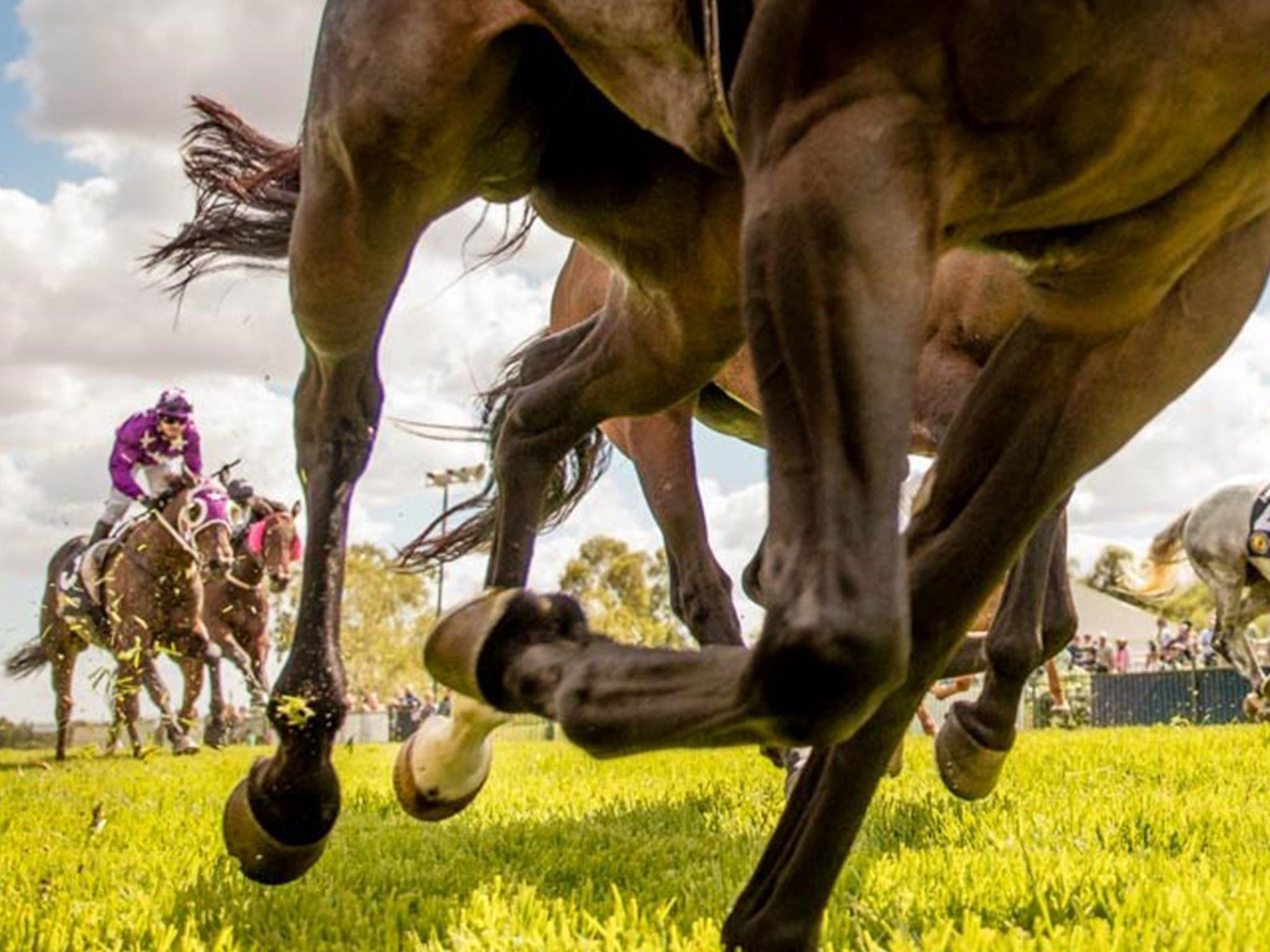 Night Markets and Race Day - Townsville Tourism