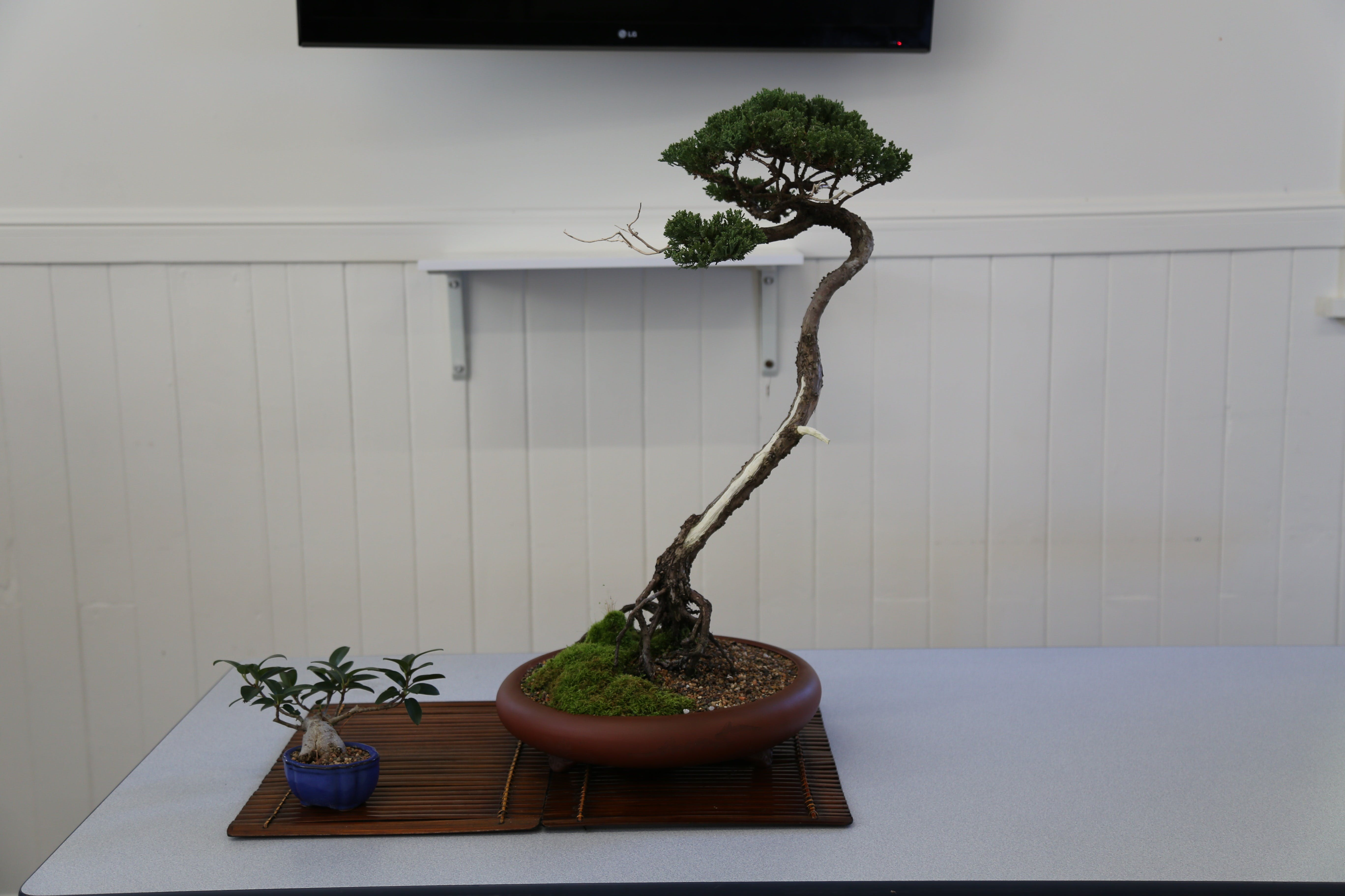 Wauchope Bonsai Workshop Group - Townsville Tourism