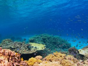 Recovery of the Great Barrier Reef - Townsville Tourism