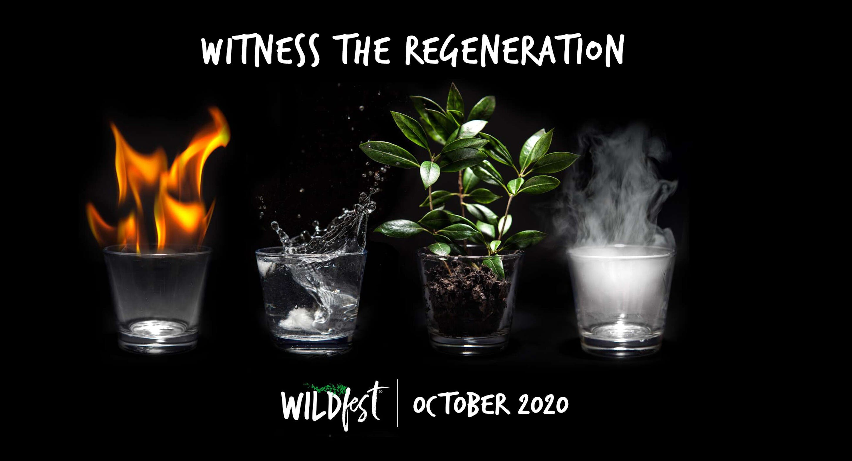Wildfest - Annual Festival - Townsville Tourism